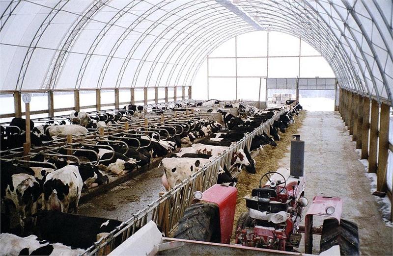 barns living barn animals livestock beef the hoop garythompson life country