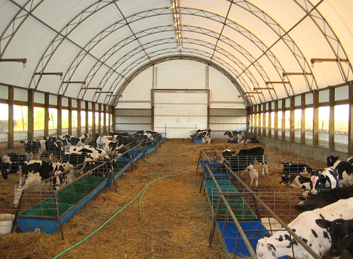 Cattle Dairy Livestock Fabric Covered Buildings Photos