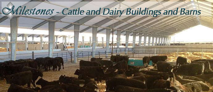 Cattle Fabric Covered Buildings Dairy Barns MBD